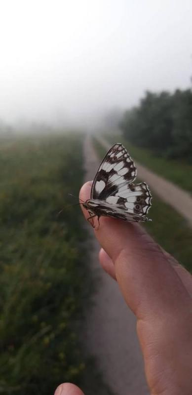 piekno natury 485